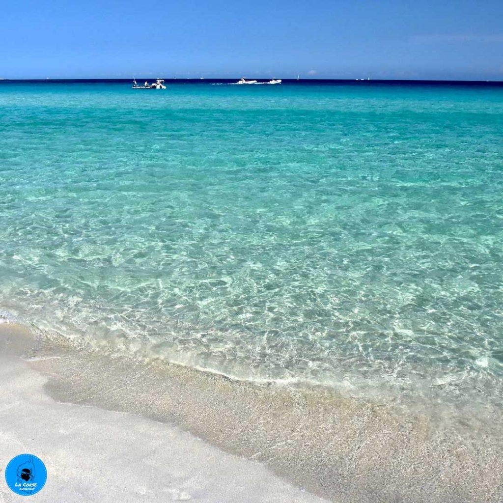 Saleccia en Corse